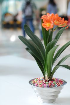 Flower in the Company Hall