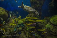 Shades of Green in Blue by SaurabhGoel1 #nature #photooftheday #amazing #picoftheday #sea #underwater