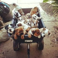 Anyone order a cart full of Bulldoggies?