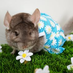 """Cosette Agnes  (@cosettethechinchilla) on Instagram: """"Everything's coming up daisies! #daisies #daisydress #flowers #april #spring #hellospring…"""""""