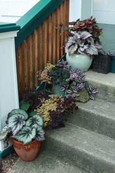 Tim's garden in Ohio--click through for more photos of this garden