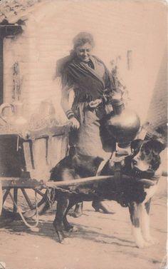 Belgian dog cart