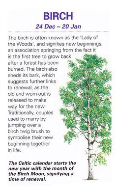 Celtic sacred trees Birch