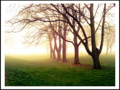 Trees in the morning mist next to Chatham Waterfront bus station