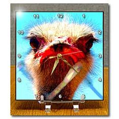 An Ostrich up close near a chain link fence with a funny face Desk Clock