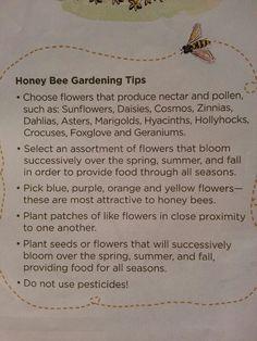 Cultivate a honeybee friendly garden Plan Bee, Bee Farm, Backyard Beekeeping, Bee Friendly, Hobby Farms, Save The Bees, Bees Knees, Bee Keeping, Garden Inspiration