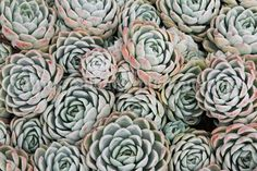 Succulent  Fine Art Photography Instant by PatrickRabbatPhotos, $12.00