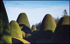 Topiary garden design