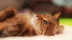 Telecharger Gratuitement Ce Fond D Ecran Cool Cats Fond D Ecran Chat Chats Et Chatons