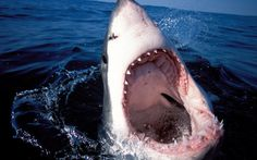 Great White Sharks Are Swarming Cape Cod and It's the Government's Fault