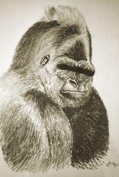 Gorilla Sketch by M41C0N.deviantart.com on @DeviantArt