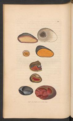British mineralogy. 378 - [Tab. LXXX. - C.] - Seitenansicht - ETH-Bibliothek Zürich (NEBIS) - e-rara