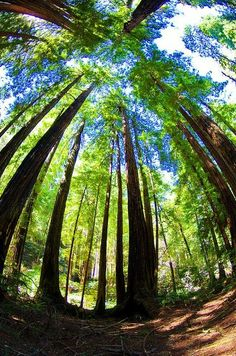 California Muir Woods 36