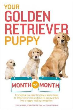 Your Golden Retriever Puppy Month by Month
