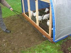 Hoop Coop/Chicken Tractor that is easy and cheap to make.