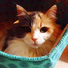 Ah, ChloeCatRobinson, you pretty kitty! You can find this kitty on Instagram, where she pretty much just always looks fabulous. Today she's showing off her Cat Ball� cat bed. Thanks to our customers for sharing their photos with us!