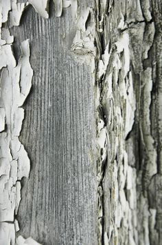 tree bark...would love to create a digital print of this on fabric