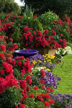 Stunning!Purple birdbath against red roses and yellow flowers.
