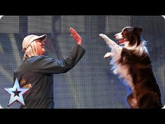 Catch Jules and Matisse the dog in action Britain's Got Talent 2015 Britain Got Talent, Matisse Dog, Beautiful Songs, Hd Movies, Films, America's Got Talent, Cute Gif, Four Legged, Border Collie