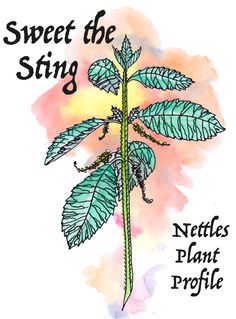 Envisioning Healing : The New Moon in Aries — Worts + Cunning Apothecary Plant Magic, Medicinal Plants, Herbal Plants, Knowledge And Wisdom, New Moon, Homeopathy, Herbal Medicine, Herbal Remedies, Apothecary