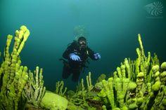 www.nautilus.com.pl  http://d04e8.skroc.pl/   nurkowanieBajkał,  Diving in Bajkal, the deepest and oldest lake- Bajkal #divingSafari