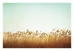 Swaying - Planscher av Carolyn Cochrane på AllPosters.se