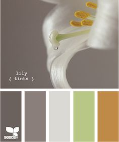 Looking for color schemes for my new apartment, and these may be winners. But would walls be better in light grey, medium grey, or green? Or the pearly color that's on the flower, but not the lower pallette?