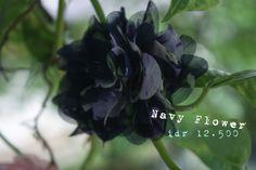 navy flower
