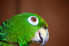 34 Stunning Pictures Of Exotic Birds