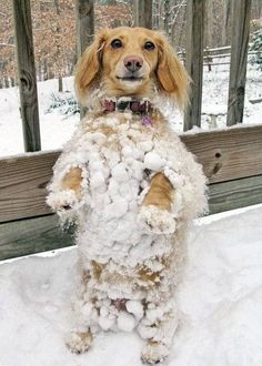 Funny Animal Pictures - View our collection of cute and funny pet videos and pics. New funny animal pictures and videos submitted daily. Funny Animal Videos, Funny Animal Pictures, Cute Pictures, Funny Animals, Cute Animals, Pet Videos, Animal Fun, Animal Pics, Cat Dog