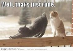 These Funny Cat Photos provide that humour break for when you need it most. Let's not take life so seriously - take some time for the silly!