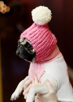 I do see this as being somewhat torturous for the pug, but seriously, could a dog in a knit hat and sweater be ANY cuter? I NEED to kiss this pug's nose immediately.