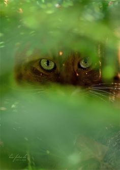I see you Crazy Cat Lady, Crazy Cats, Big Cats, Cats And Kittens, Cute Cats, Adorable Kittens, Cat Boarding, All About Cats, Shades Of Green