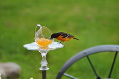 Country Girl:  Homemade Oriole Feeder All you need is some water...