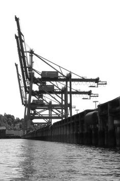 Waiting Cranes, Port of Seattle
