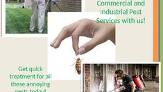 Ace Pest Control is your local and trusted Pest Control Company. Our licensed, qualified and insured staff has years of local knowledge and service in Brisbane. We can offer warranties on all of our work and provide a satisfaction guarantee. Pest Control Services, Animals For Kids, Brisbane, Knowledge, Commercial, Industrial, Industrial Music, Facts
