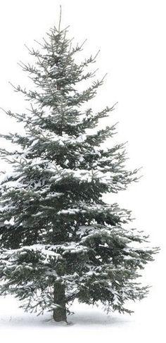I Love Winter, Winter Colors, Winter Snow, Winter Time, Winter Green, Noel Christmas, Winter Christmas, Green Christmas, Snow Scenes