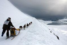 La Grande Odyssée Savoie Mont Blanc è corsa con cani da slitta su un percorso di 1000KM , in 9 tappe. La corsa si snoda su un mercorso difficile e accidentato.
