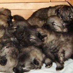 Look at the cuties!