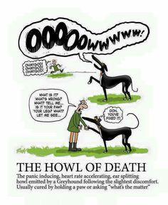 Greyhound Scream of Death