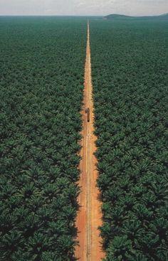 Train track through the Congo jungle