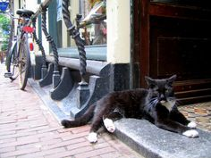 Cat in Amsterdam;Netherlands