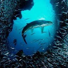 under the sea - Google 검색