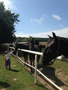 Taking TinyExpats to a farm near Pardubice Horse Breeds, Czech Republic, Farm Animals, Great Places, Fields, Travelling, Places To Visit, Horses, Bohemia