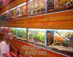 style3 Aquarium Store, Slot Online, Windows, Stock Photos, Aquarium Shop, Ramen, Window