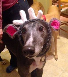 I crocheted reindeer hats for my greyhounds.