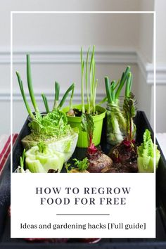 A guide showing you how to make a vegetable garden as a beginner. Apartment Vegetable Garden, Indoor Vegetable Gardening, Starting A Vegetable Garden, Vegetable Garden Design, Gardening Tips, Types Of Vegetables, Planting Vegetables, Grow Your Own Food, Grow Food