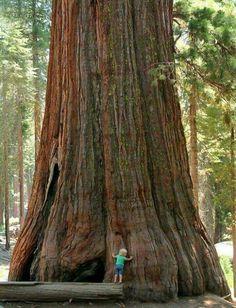 ¿Como será de alto éste árbol ?