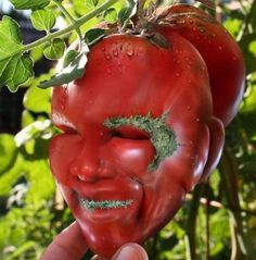 16 Funny-Shaped Fruits And Vegetables That Forgot How To Be Plants Strange Flowers, Unusual Flowers, Rare Flowers, Amazing Flowers, Weird Fruit, Funny Fruit, Weird Plants, Unusual Plants, Funny Vegetables