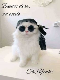 Con estilo = with style Happy Birthday Frame, Birthday Frames, Morning Cat, Morning Messages, Good Morning Quotes, Owl, Funny Memes, Cats, Animals